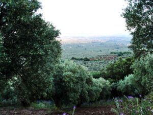 View from Tenuta Mendicino | Olive groves in Lamezia Terme